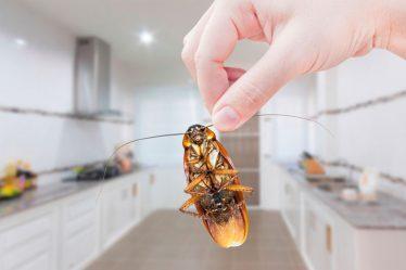 Рейтинг ТОП 7 лучших средств от тараканов